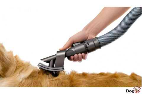 Pet Hair Reducing And Prevention Suggestions Creative